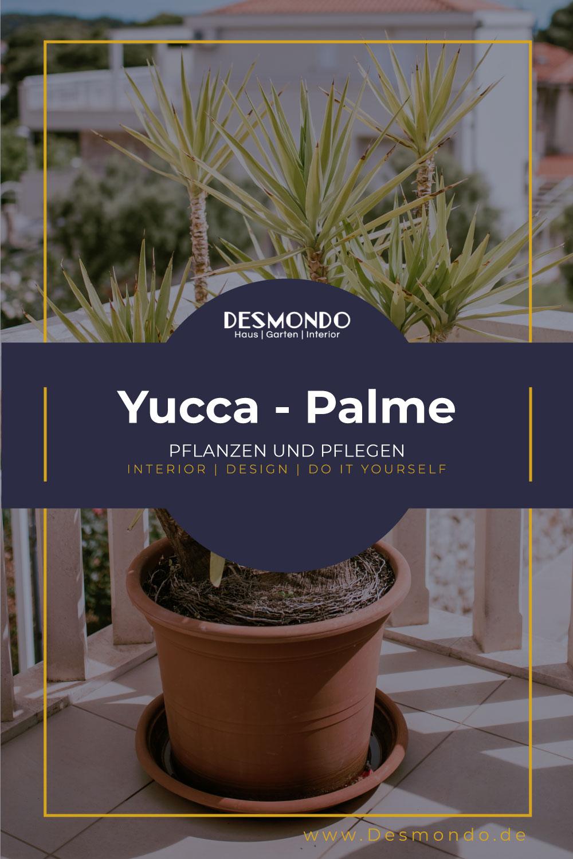 Outdoor - Inspirationen für Balkon und Garten - Wissenswertes damit deine Yucca Palme gut gedeiht- so gehts einfach desmondo dein online shop und magazin