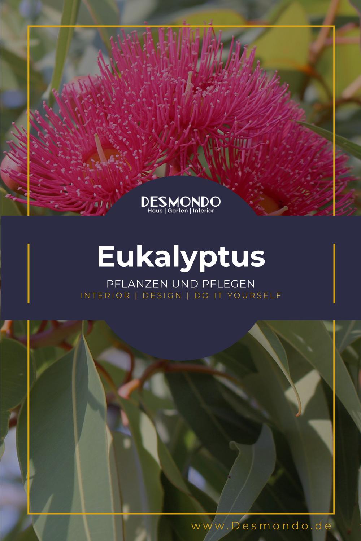 Outdoor - Inspirationen für Balkon und Garten - Eukalyptus anpflanzen und pflegen- so geht's einfach Desmondo dein online Magazin und Shop