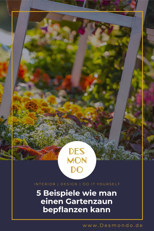 Outdoor - Inspirationen für Balkon und Garten - 5 Beispiele wie man einen Gartenzaun bepflanzen kann- so geht's einfach Desmondo dein online Magazin und Shop