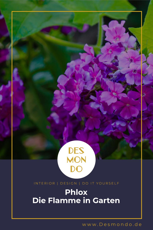 Outdoor - Inspirationen für Balkon und Garten - Phlox - Die Flamme in Garten- so geht's einfach Desmondo dein online Magazin und Shop