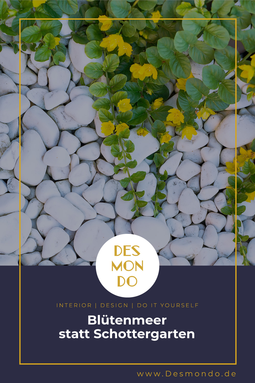 Outdoor - Inspirationen für Balkon und Garten - Blütenmeer statt Schottergarten- so geht's einfach Desmondo dein online Magazin und Shop