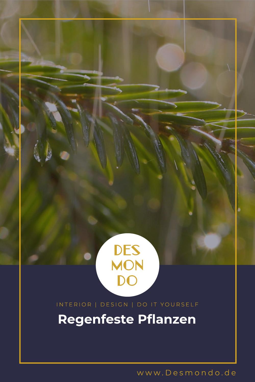 Outdoor - Inspirationen für Balkon und Garten - Regenfeste Pflanzen- so geht's einfach Desmondo dein online Magazin und Shop
