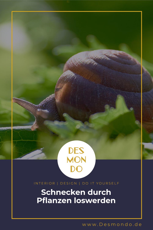 Outdoor - Inspirationen für Balkon und Garten - Schnecken durch Pflanzen loswerden- so geht's einfach Desmondo dein online Magazin und Shop
