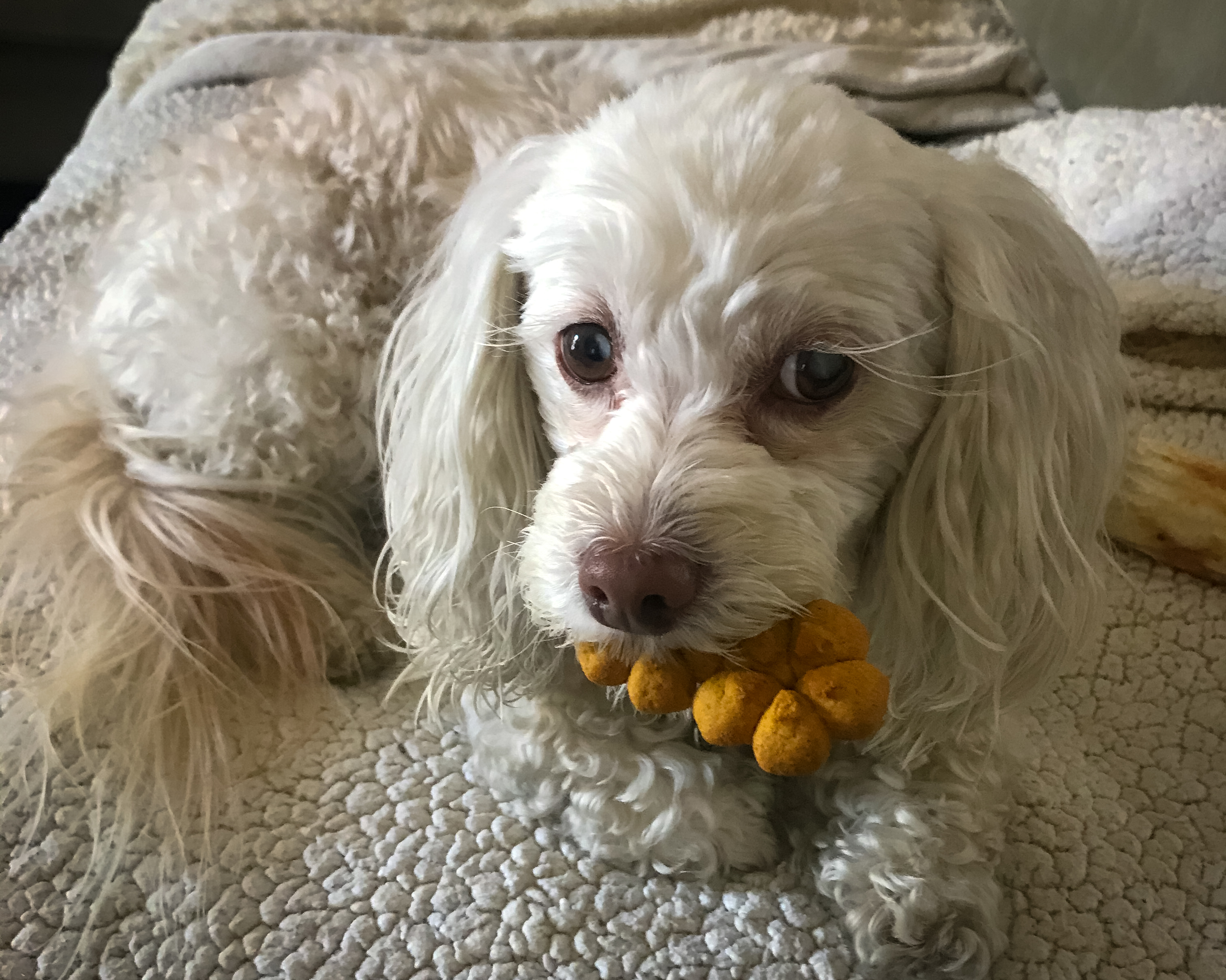 Dog with treat in mouth