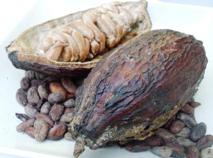 Cocoa pods and cocoa beans. School Chocolate Workshops. KS2 school trips.