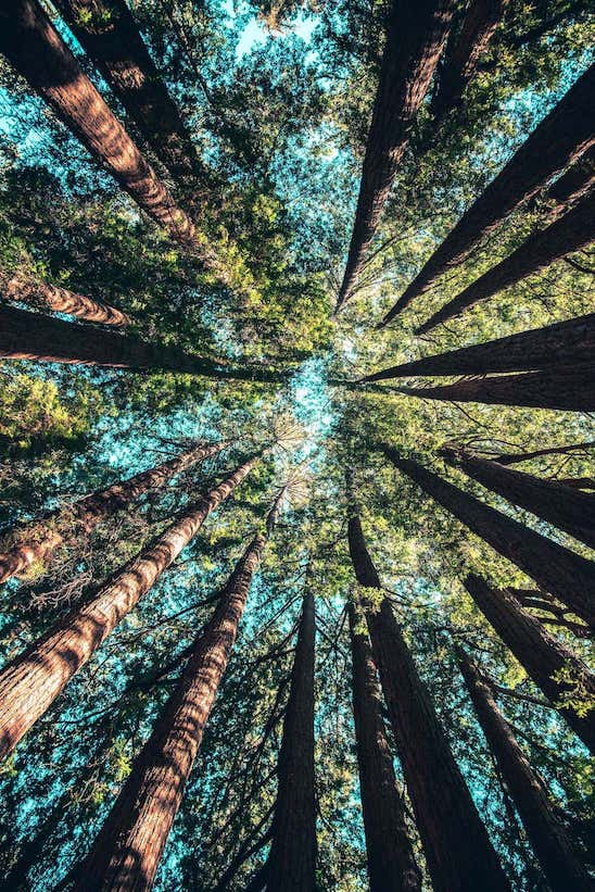 78 trees to absorb the average Australian footprint