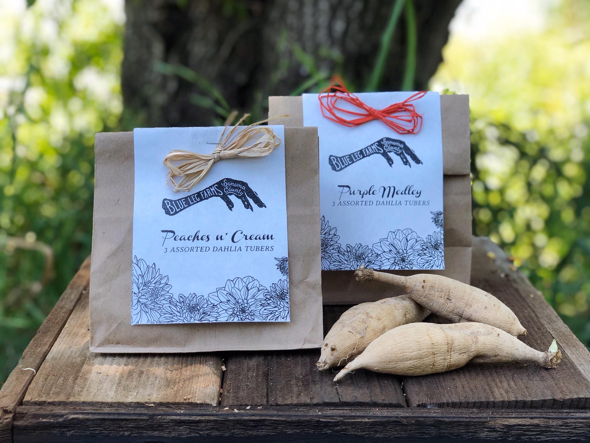 Dahlia Gift Pack: