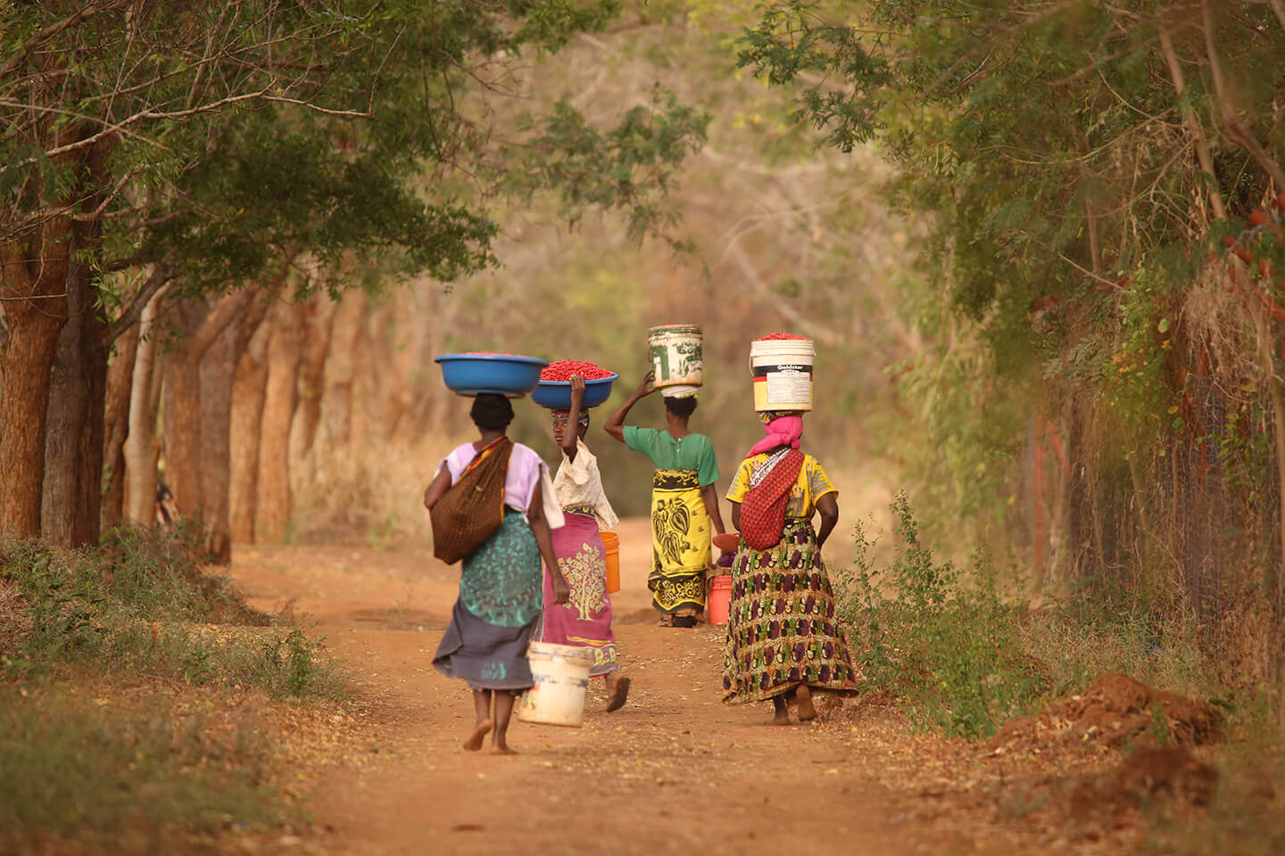 African women carrying chilis