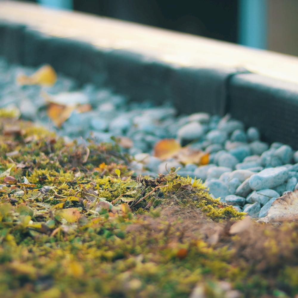 Een close-up van de rand van een groen dak met kiezelstenen