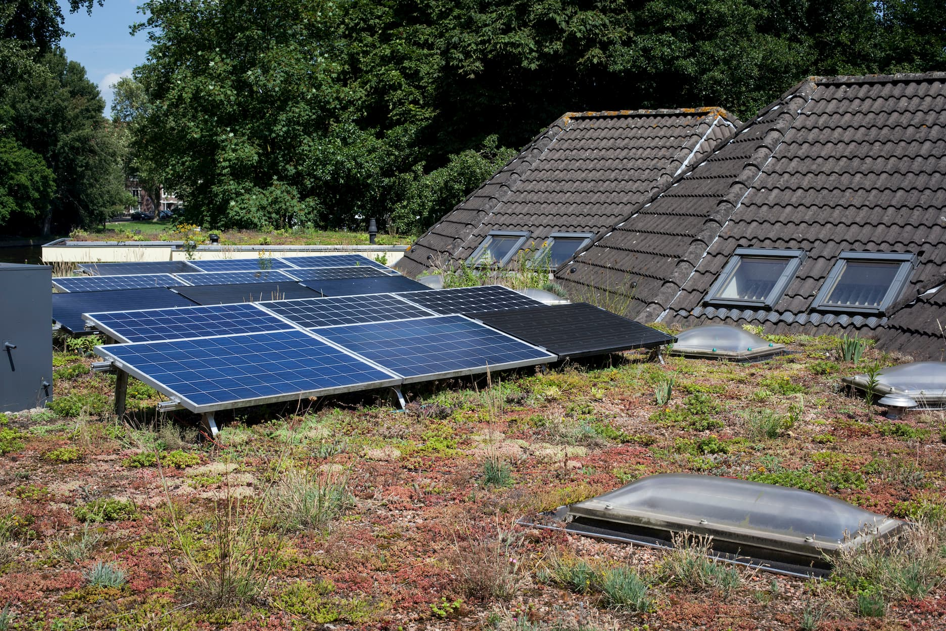 Groen dak onder zonnepanelen in Amsterdam