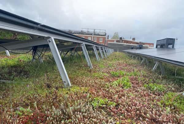Juiste Integratie van Zonnepanelen boven een groen dak met een Solar Sedum Airframe