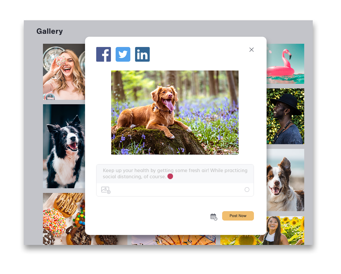 Nuvi Smart Social's gallery is featured in this image. The gallery shows eight images. Two are of dogs, two donuts, one a volleyball game, one a woman in a field of sunflowers, one feature a man in a black hat, and the last is a pink flamingo swimming tube. Those images are all in the background. An image hovers above the rest in a white container. The image is of a dog resting on a mossy rock in a forest of purplish, blue flowers. The white container also has three social profiles listed by their icon's above the image. They are Facebook, Twitter, and LinkedIn. Below the image is a text box that reads: keep up your health by getting some fresh air! While practicing social distancing, of course. The text is followed by an emoji smiley face. Below the text box is a small calender icon that allows you to schedule the post and a post now button in yellow.
