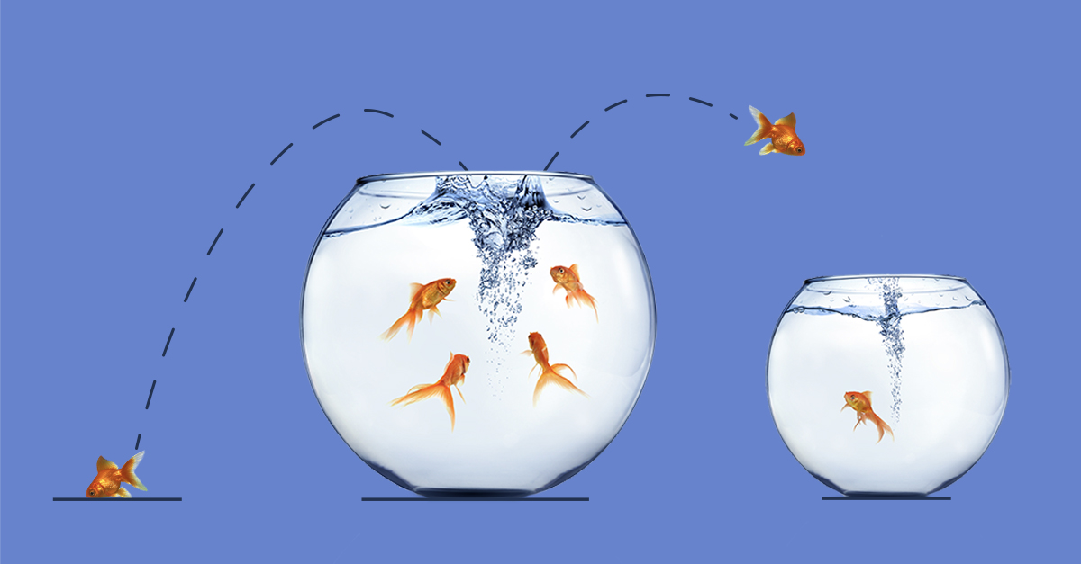 A creative image showing churn with the analogy of a goldfish jumping into a large fish bowl with several fish, but then jumps out and into a small bowl with only one fish. This shows how easily customer churn can happen.