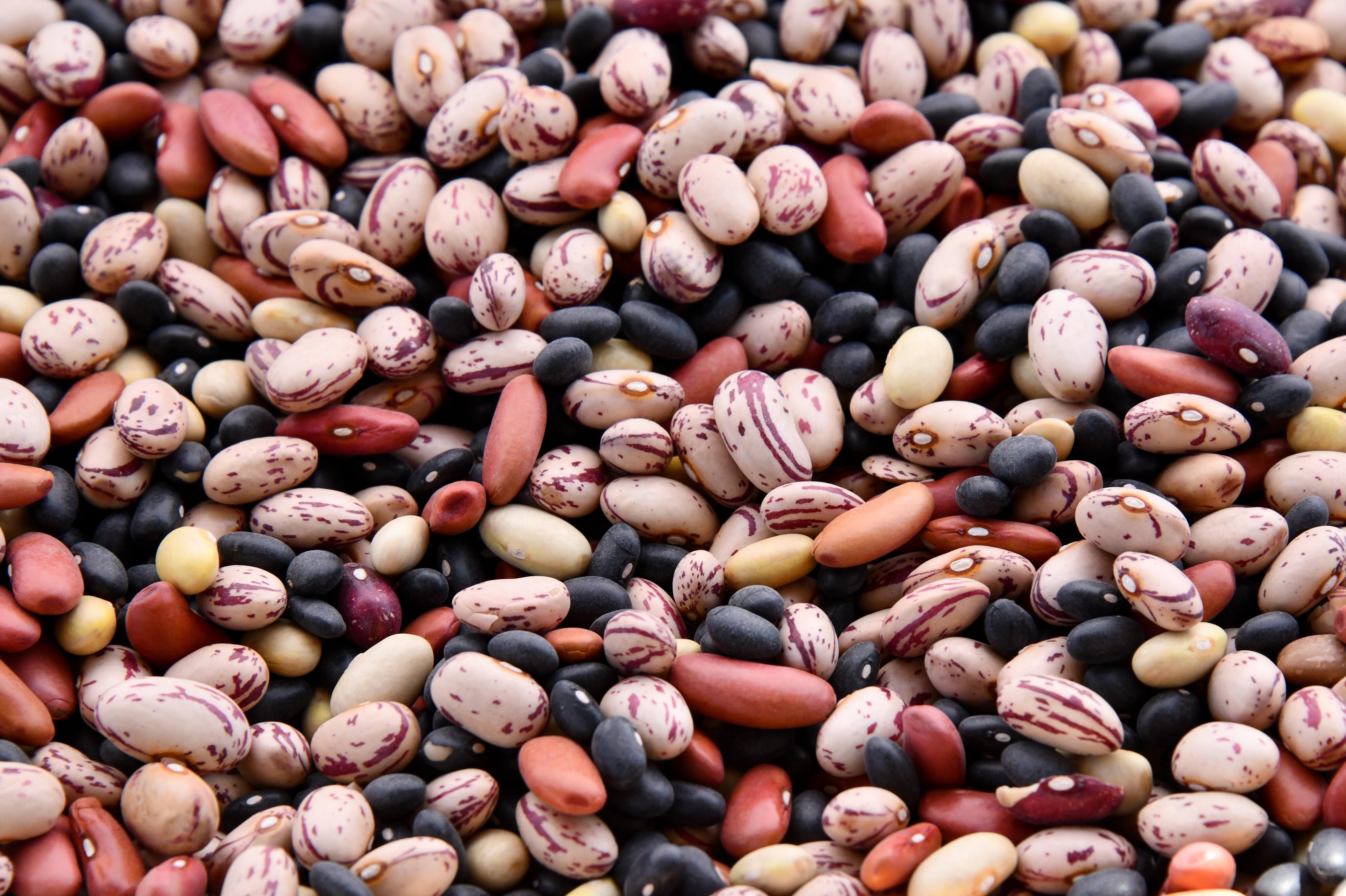 Beans Donation
