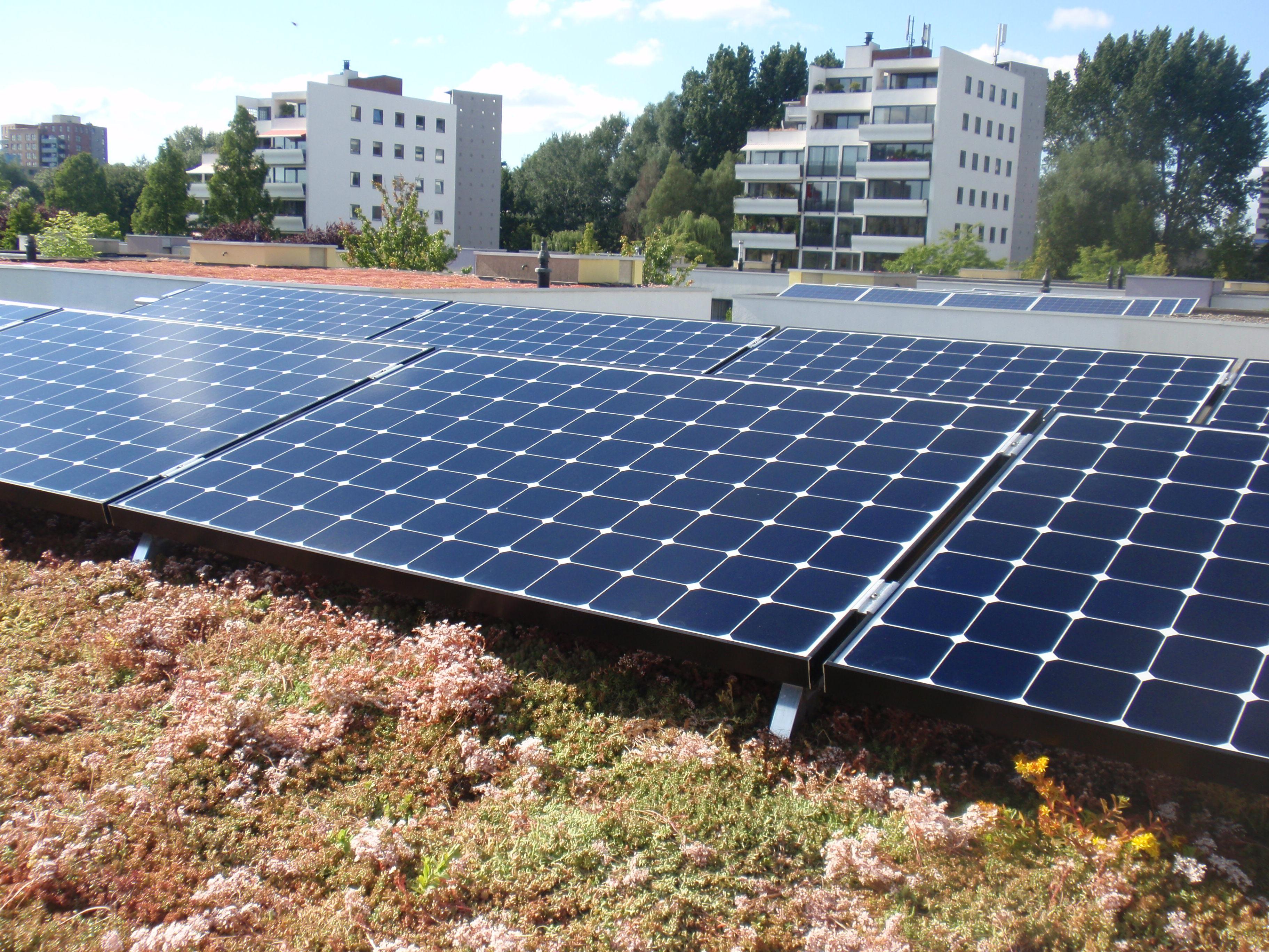 De voordelen van zonnepanelen met een groen dak in 2021 | Solar Sedum