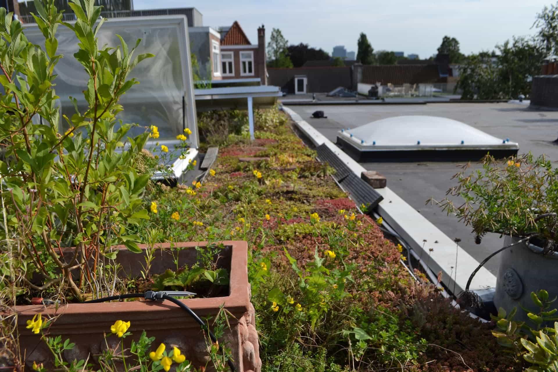 Klantenervaring: Groen dak met zonnepanelen