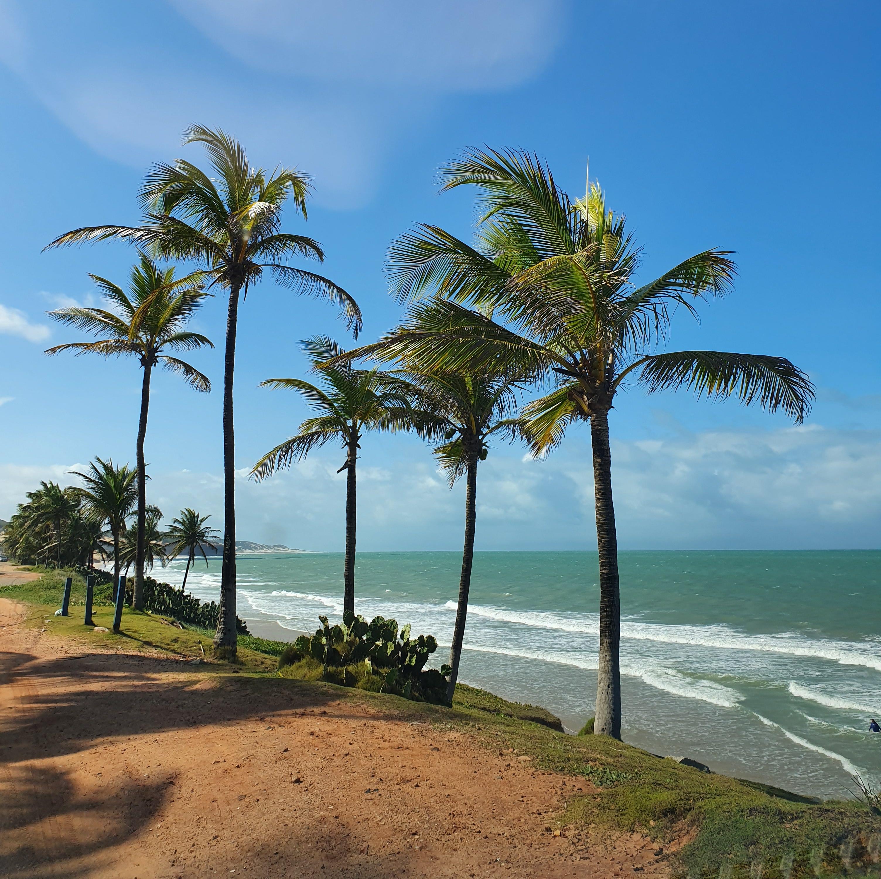 praia de Pium com céu limpo e coqueiros