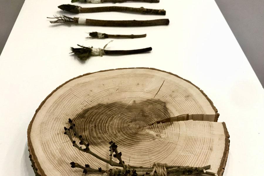 Artwork: Ash Tree Stream Exhibition at CAS (Chapel Arts Studios) with Andover Trees United, Photography Credit: James Aldridge
