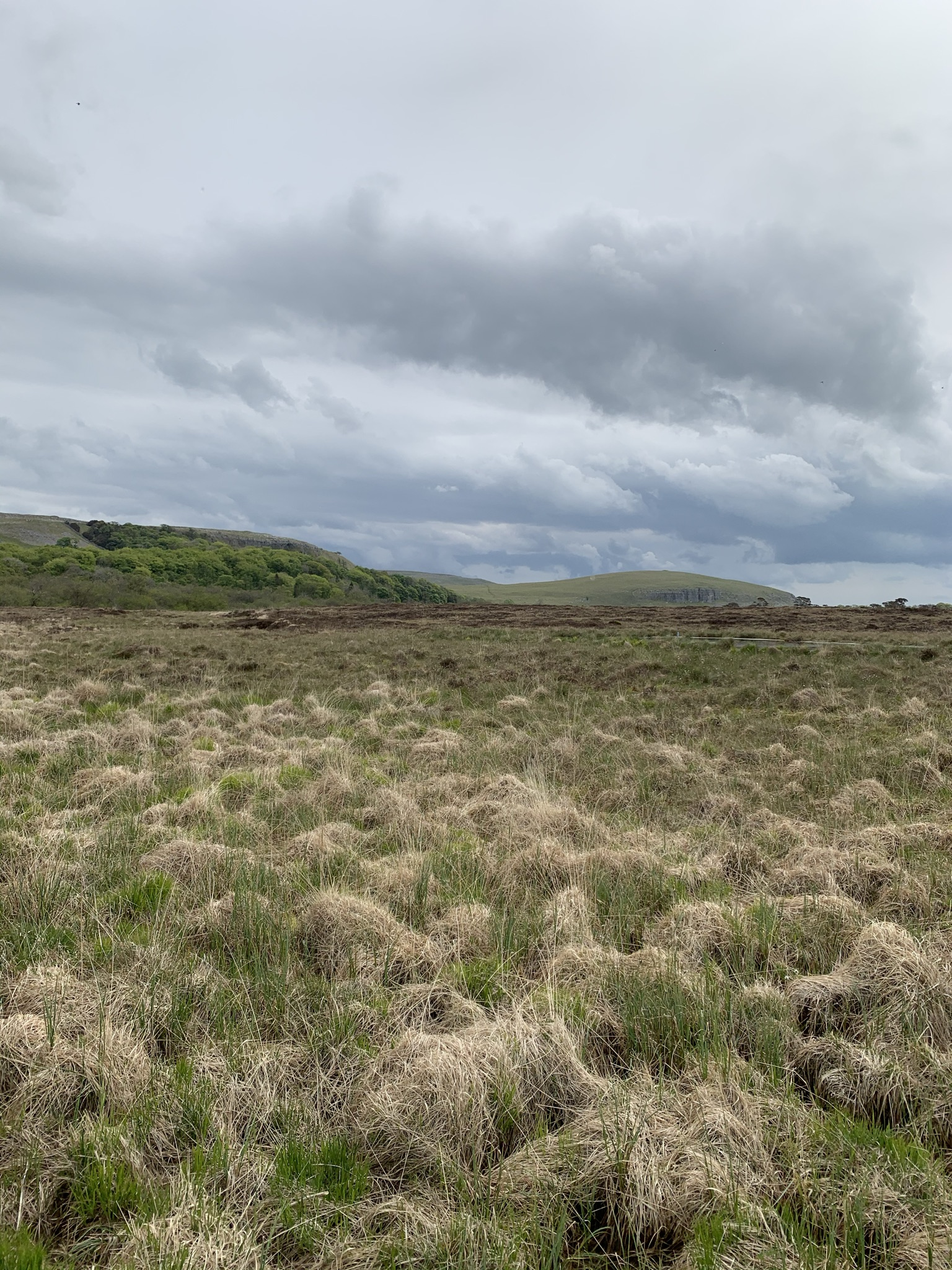 Deep peat land at Malham Tarn National Nature Reserve