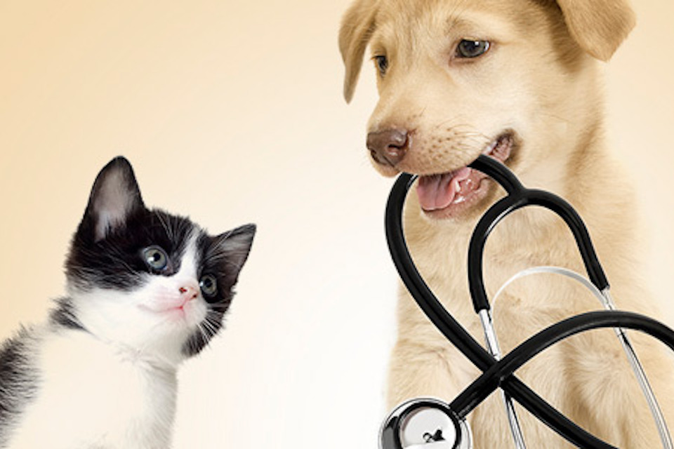 Benefits of spaying and neutering your pet
