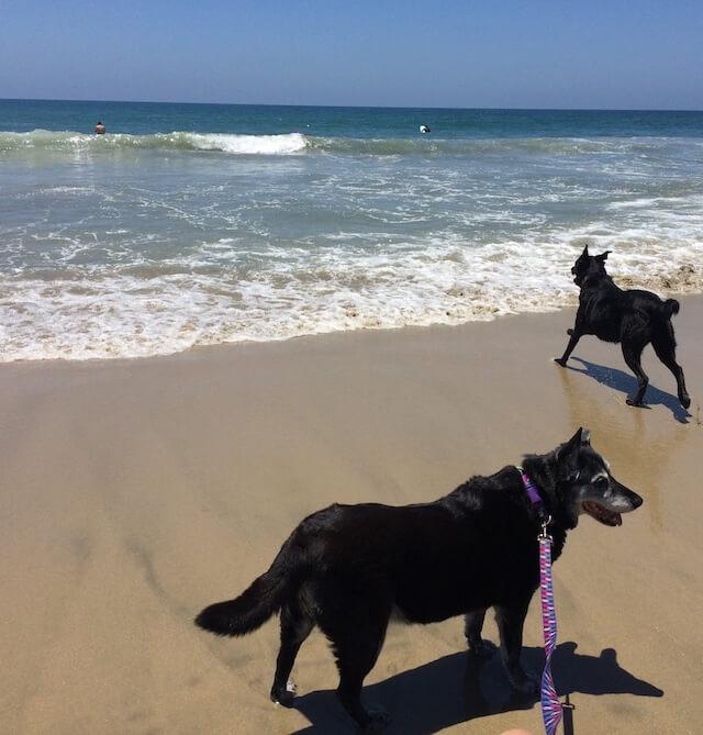 Caroline at California dog beach