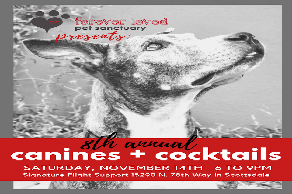 Canines + Cocktails 2020