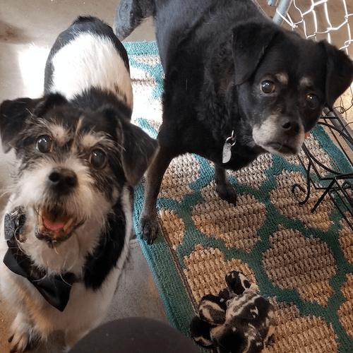 Macy & Scruffy (bonded)
