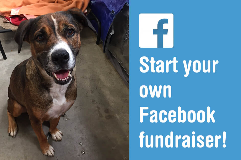 Create your own Facebook Fundraiser