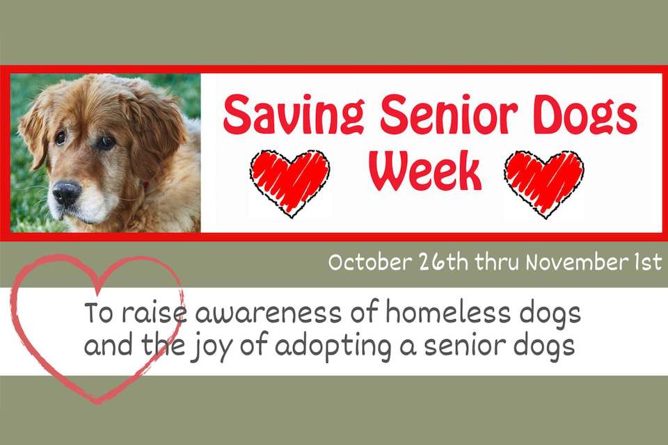 Saving Senior Dogs Week