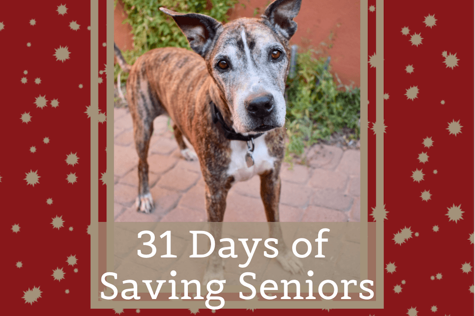 31 Days of Saving Seniors