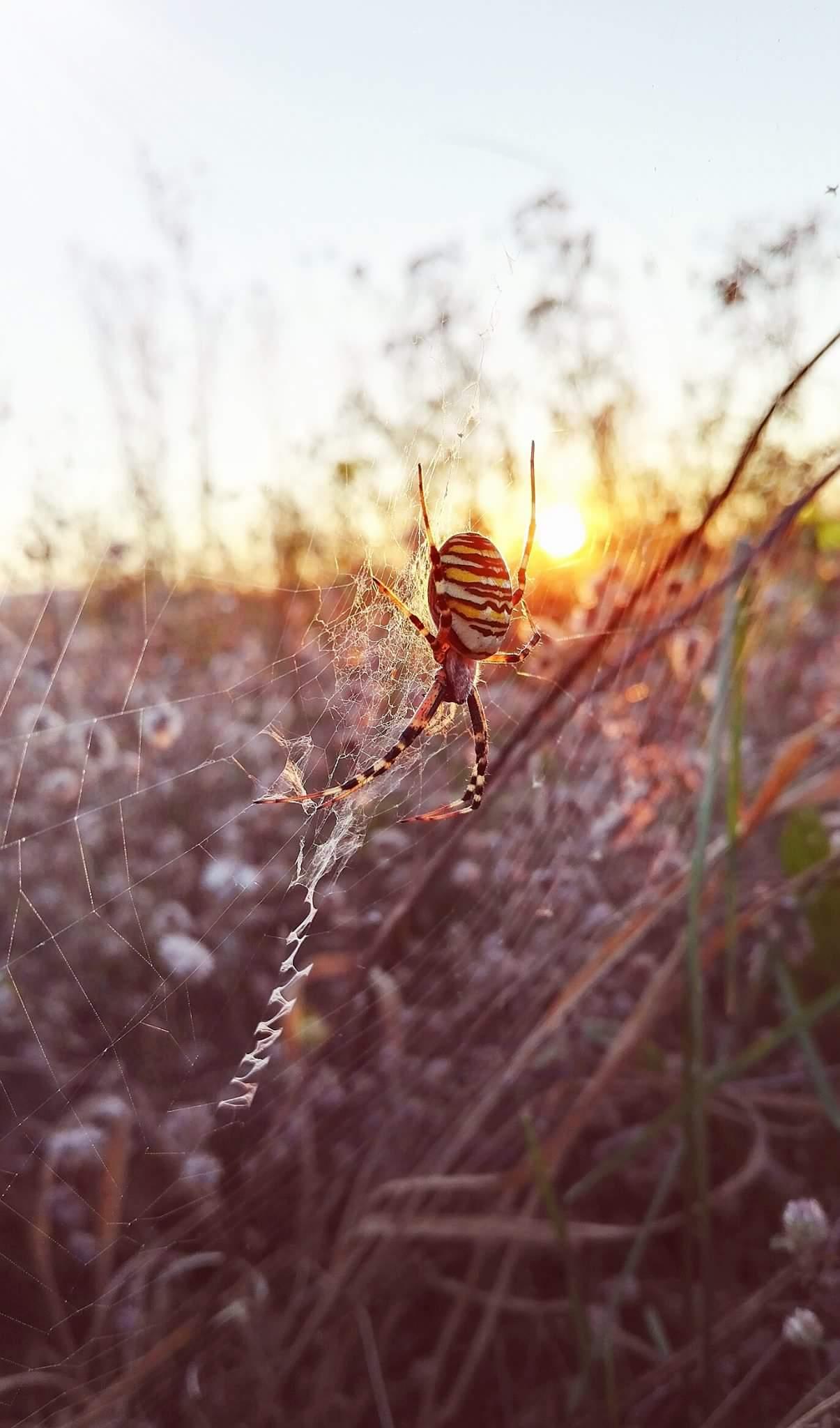 """Die Spinne und die """"heilige"""" Dunkelheit - der Weg zu Deinem inneren Licht."""
