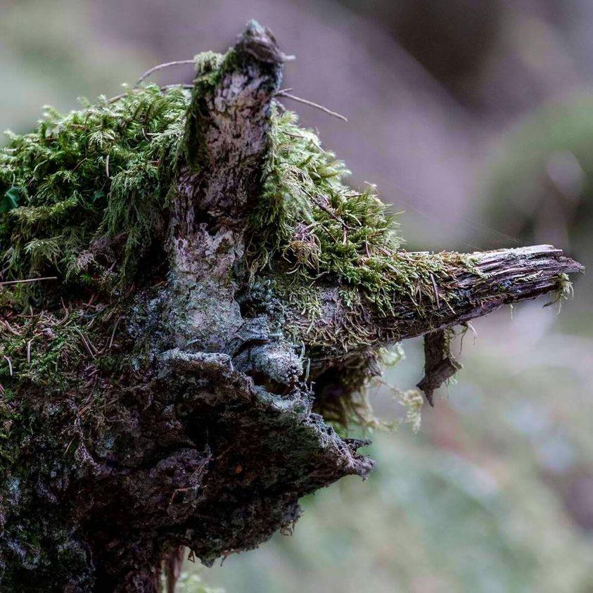 Naturwesen- eintauchen in die Welt mystischer Naturwesen
