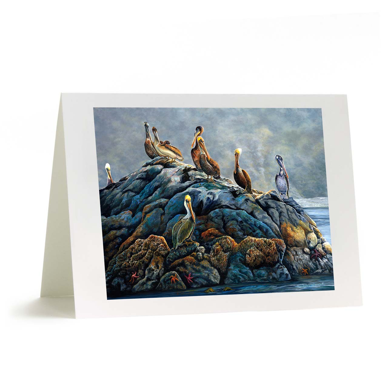 """Brown Sea Pelicans Greeting Card - """"Rockin Out"""""""