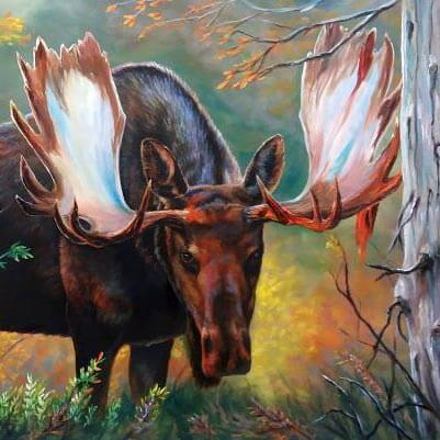 Memorable Moose Encounters and Why You Should Love Wildlife