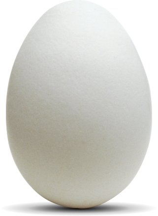 Graphic of egg