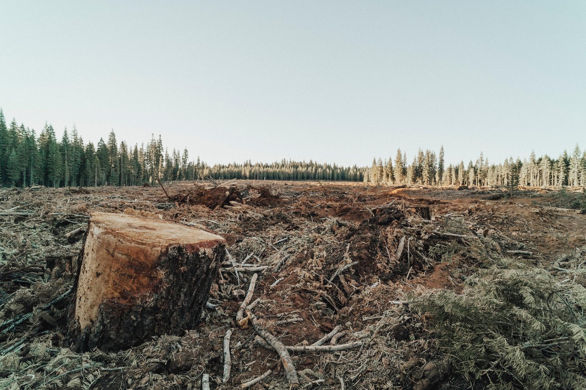 Tree stump after deforestation