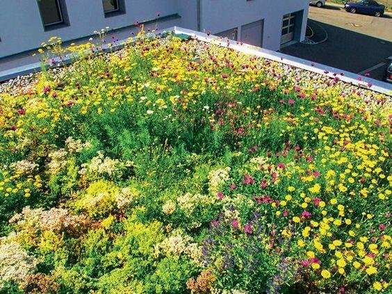 une belle toiture végétale