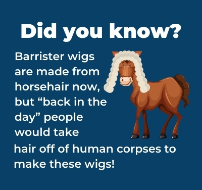 """A cartoon horse wears a barrister wig, with the caption: Did you know? Barrister wigs are made from horsehair ow, but """"back in the day"""" people would take hair off of humans corpses to make these wigs!"""