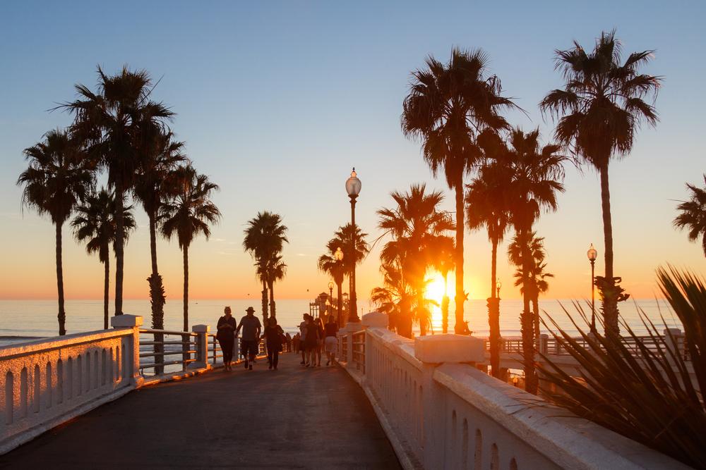 newport beach california palms