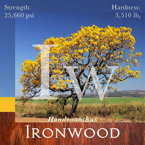Ironwood tree photo