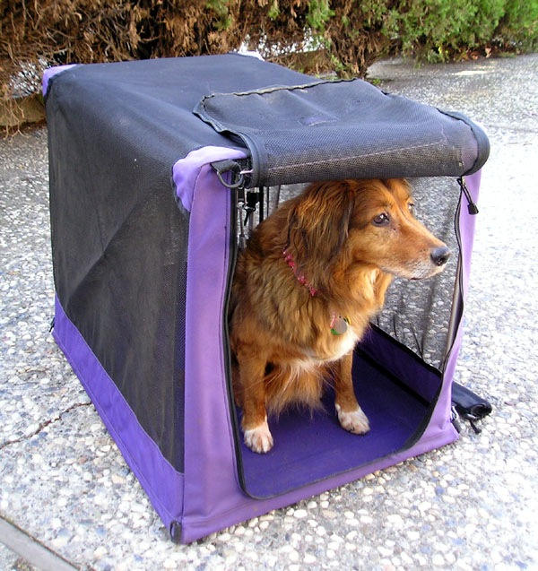 Crates provide a safe space for your dog