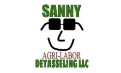 Sanny Corn Detasseling and Roguing