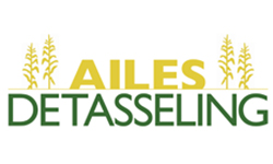 Ailes Corn Detasseling and Roguing