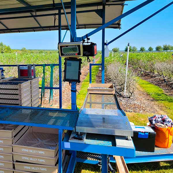 Time Portal - Blueberry Harvesting - Blueberry Farm Labor Payroll Software - Multiple Scales - H2A Program