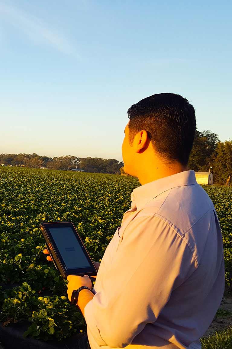 Strawberry Harvesting - H2A Visa Program - HarvestPay - Field Clock - H-2A Visa Program