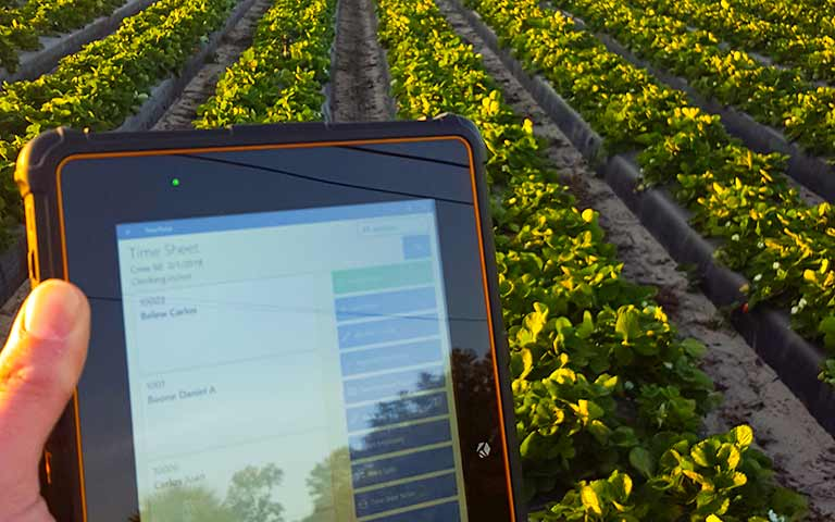 Strawberry Harvesting - H2A Visa Program - HarvestPay - Field Clock - Rugged Tablet