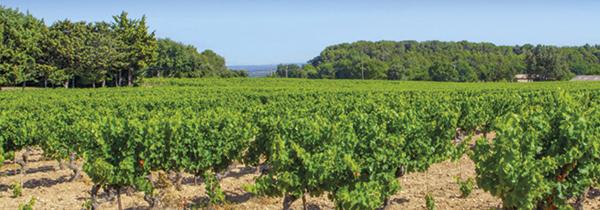 Hostellerie des Vins de Rognes