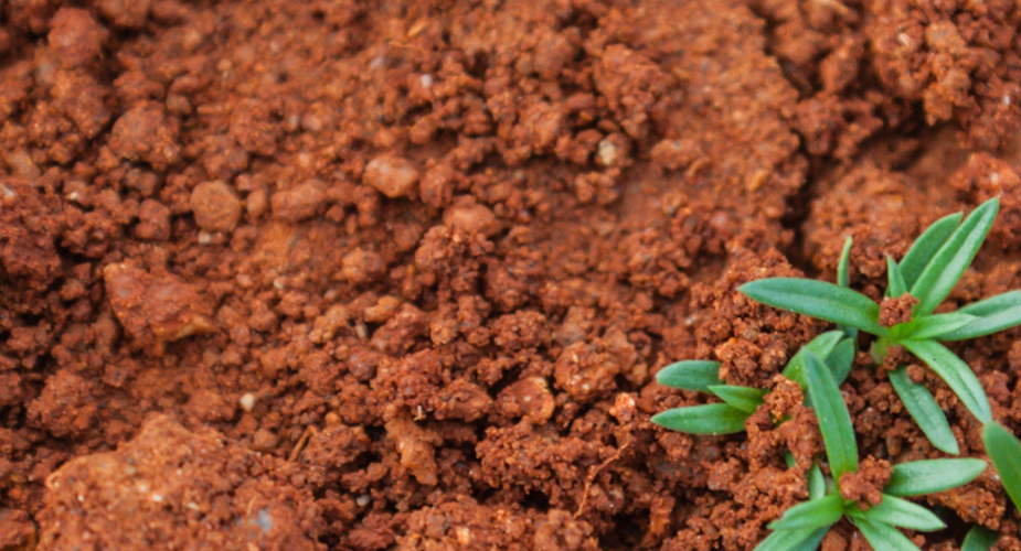 Nori Soil Sequestration Carbon Offset Project