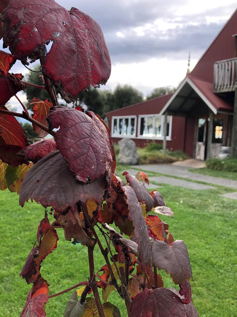 Autumn vine colour