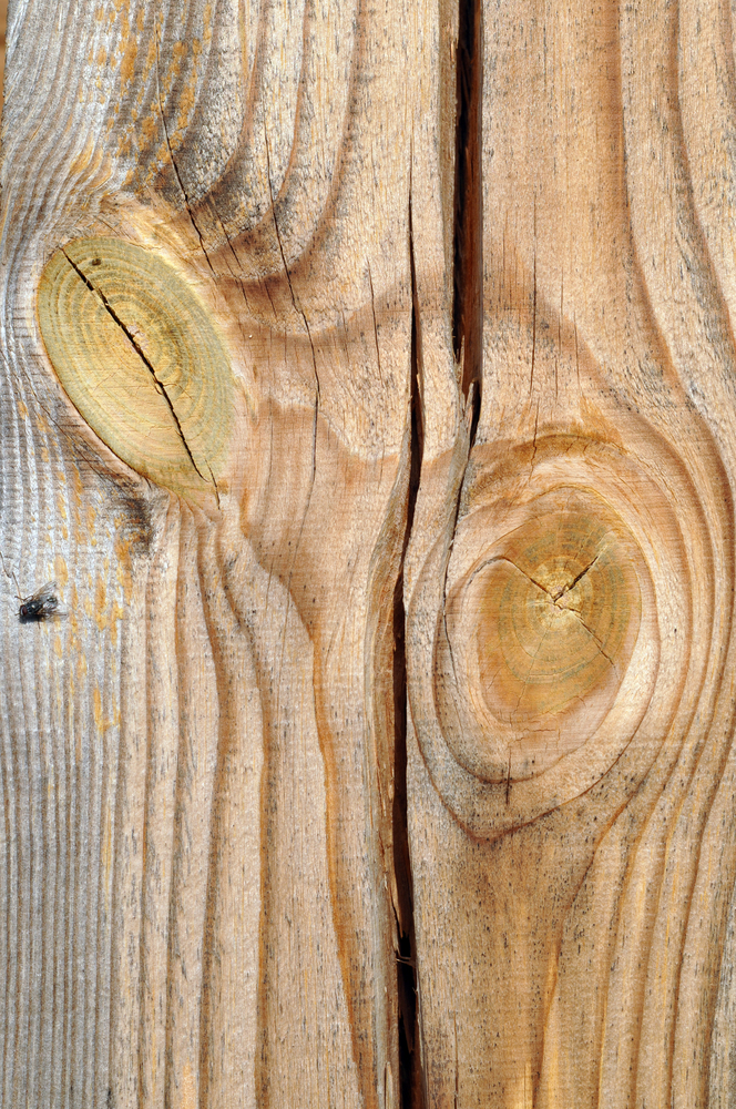 revner i træ